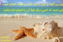 estrella-de-mar-y-conchas_1600x900_1190