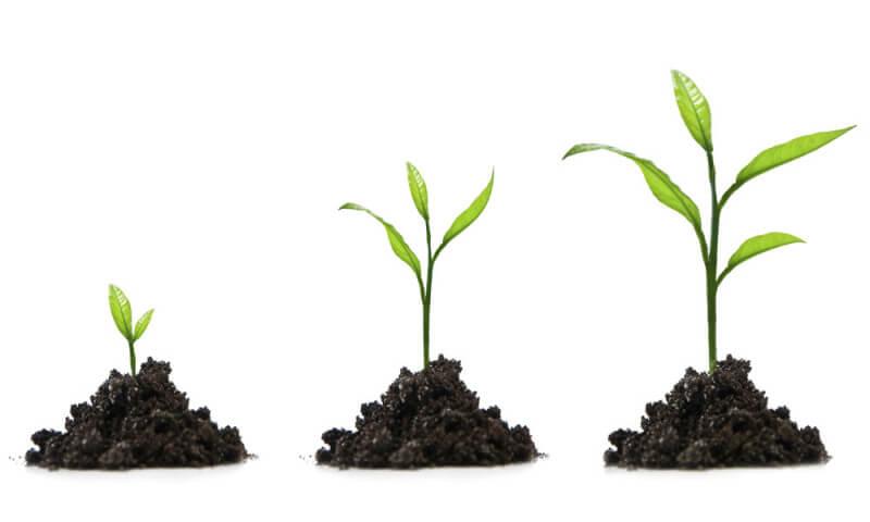 رشد و افزایش مهارت